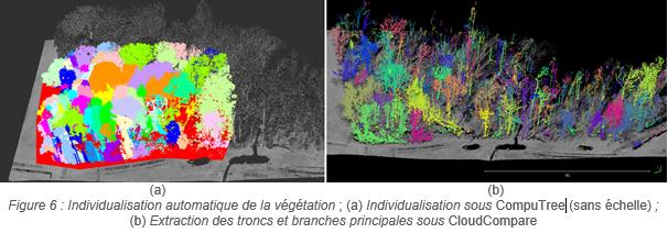 Vegetation_figure 6